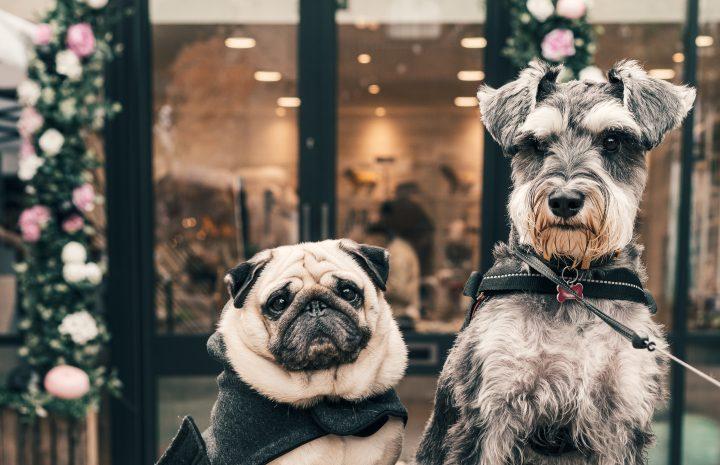 4 Gründe, warum Ihr Hund nicht mit Stöcken spielen sollte